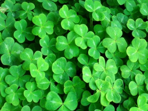 Peruvian Clovers CAJAMARCA wallpaper | 1920x1080 | 225649 ...