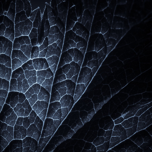 leaf | by Villi.Ingi