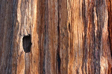 3bark-texture_source-of-Har.jpg | by janinsanfran