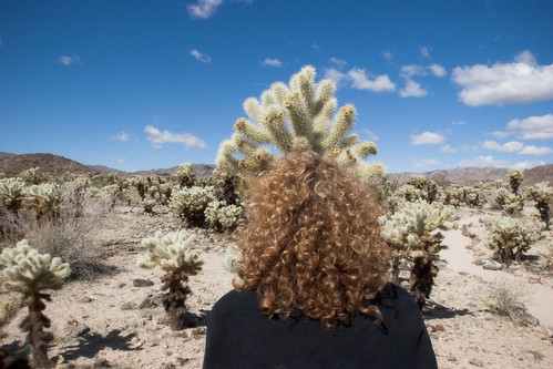 cholla and redhead | by chinese johnny