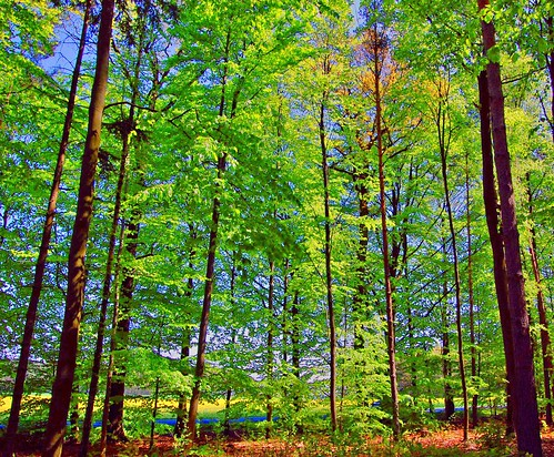 My Forest was so green ... | by Tobi_2008
