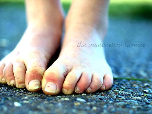 feet1 | by the inadvertent farmer