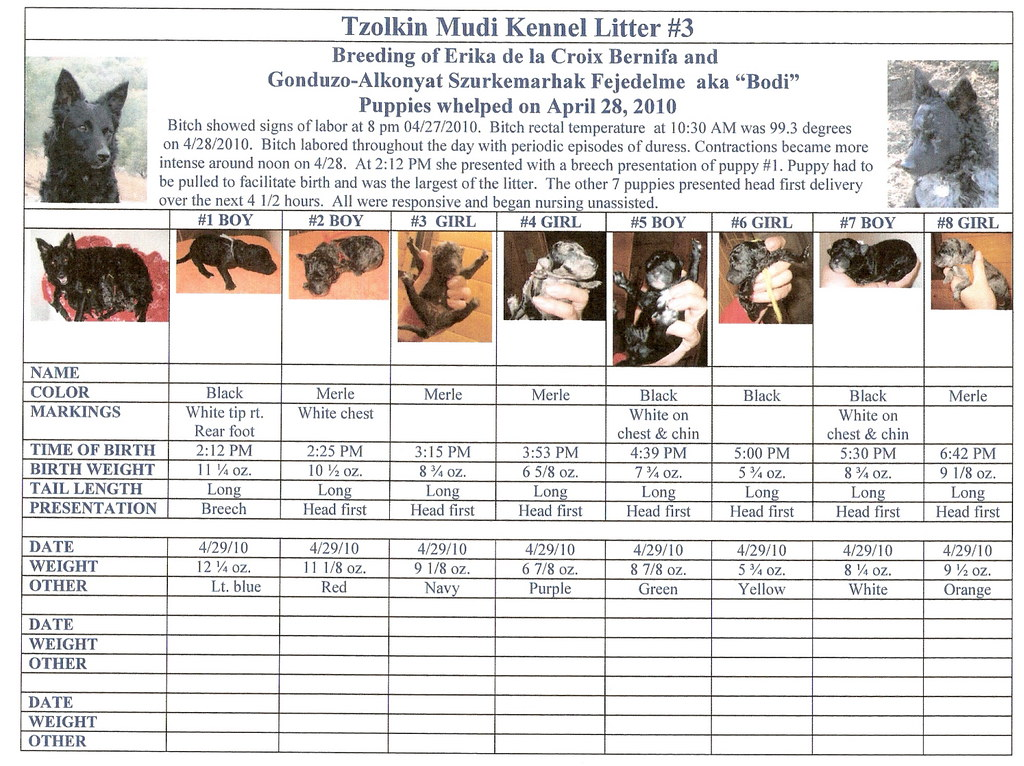 Litter 3 Birth Chart Statistics Of Birth And Growth Weigh Flickr
