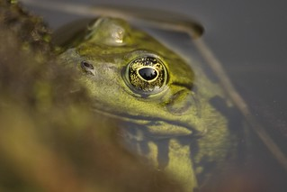 Frog | by Foto Wouter