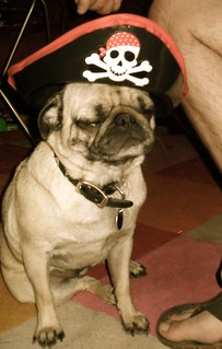 Pirate Pug | by Hot Butter!
