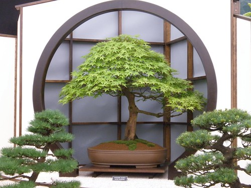 Chelsea 2010 bonsai amanda slater flickr for Jardin interieur japonais