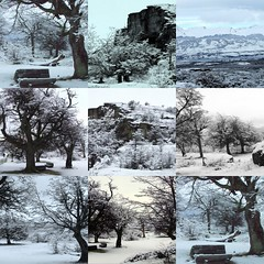 collage Invernal | by Naturaleza