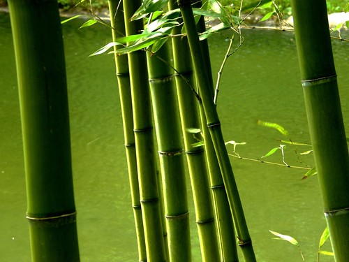 Bambu | by florenarocena