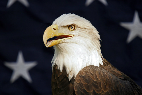 Eagle and Flag | by Picture Taker 2