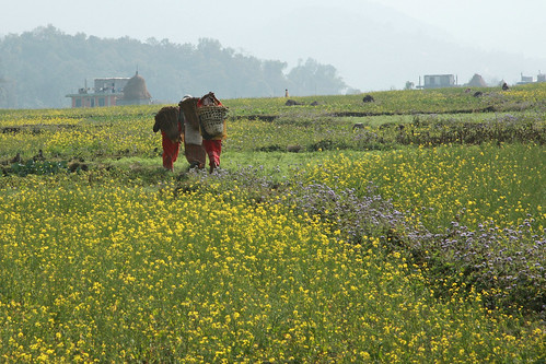 Women carry bundles through field in Kaski, Nepal | by World Bank Photo Collection