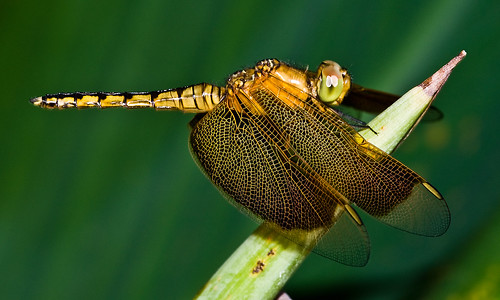 Dragonfly | by rosskevin756