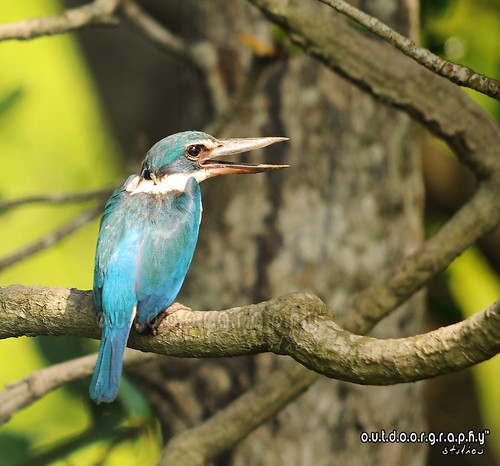 Forest Kingfisher #2 | by Sir Mart Outdoorgraphy™