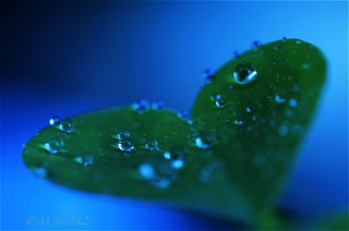 ❤ ❍ ○ blue + green | by M'sheArt2 Photography