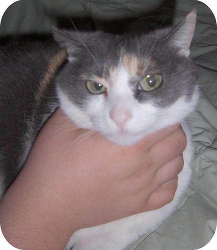 Cat Choking Up Food