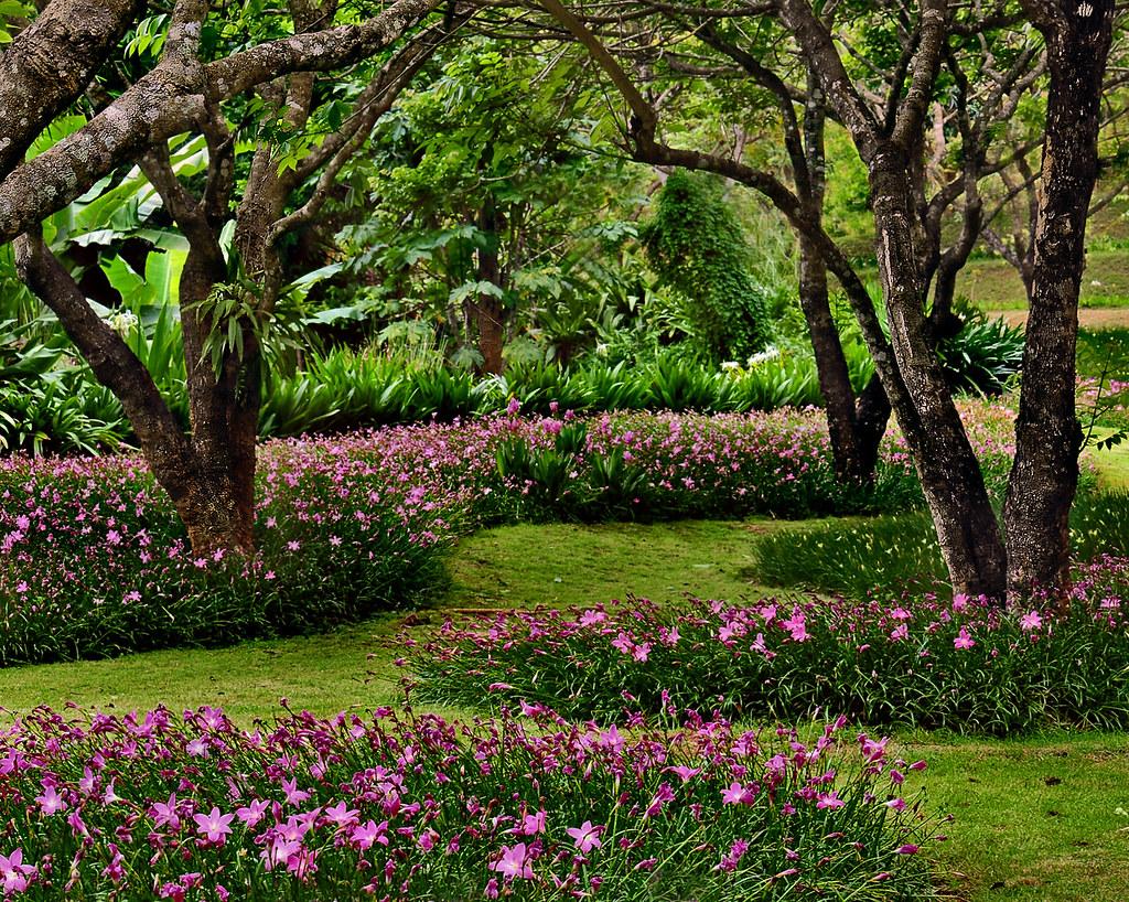 Pink flower field explore highest position 24 on sun flickr pink flower field by peem pattpoom mightylinksfo