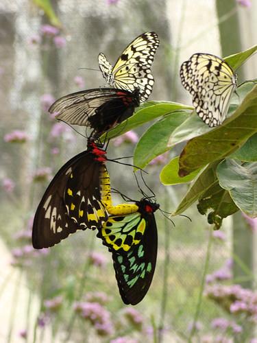 Butterfly A Whole Turkey America S Test Kitchen Butterflied