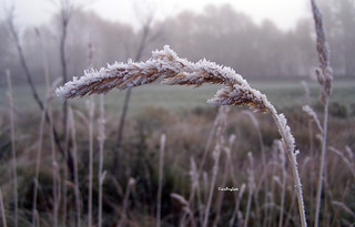 "One Foggy and Frosty Morning.....""EXPLORE"" 