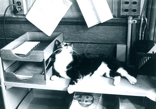 Prudence the Library Cat | by James Blackstone Memorial Library