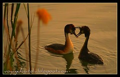 Tango at Sunset | by voyageAnatolia.blogspot.com