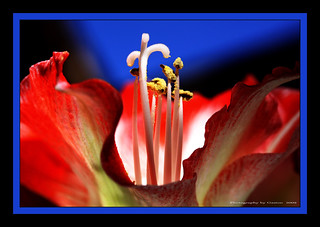 ~~~Glowing with Beauty~~~ | by ~~~Gasssman~~~
