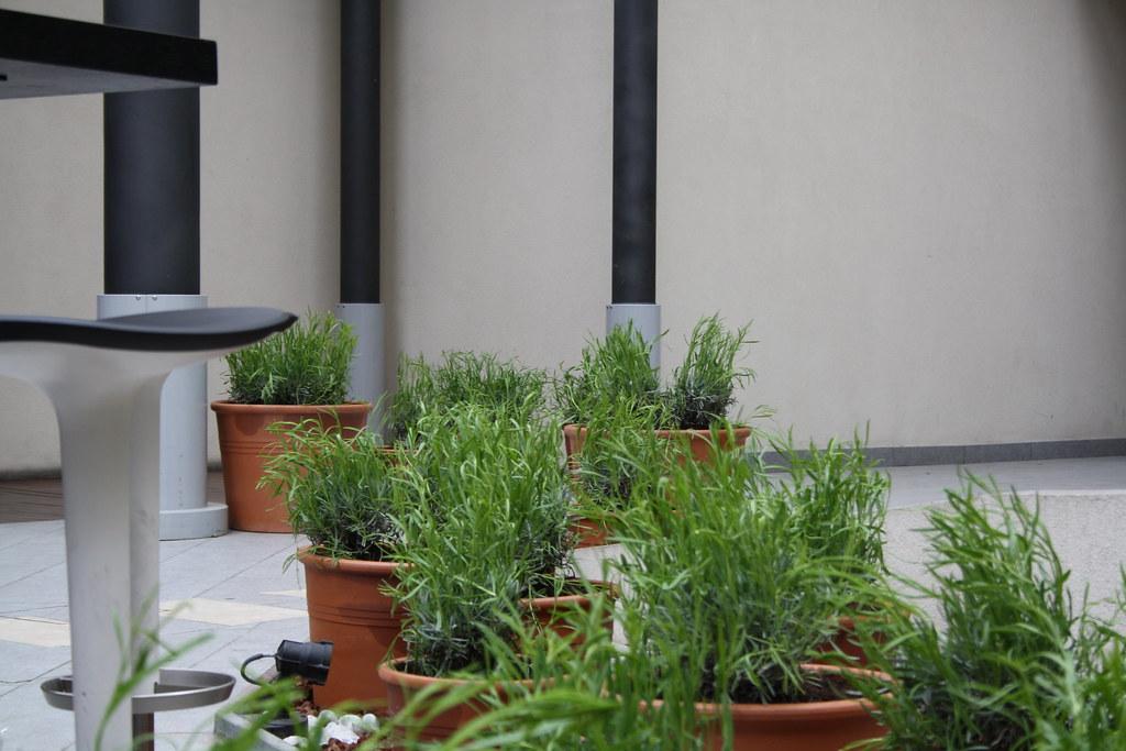 Terrazza Estiva Vineria Jesolo Vineria Group Flickr
