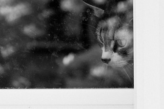 Angel looks out window b&w | by loco's photos