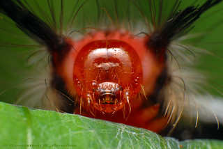 Red face | by Rundstedt B. Rovillos