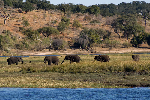 Chobe National Park (31 of 74) | by Tim Copeland - world