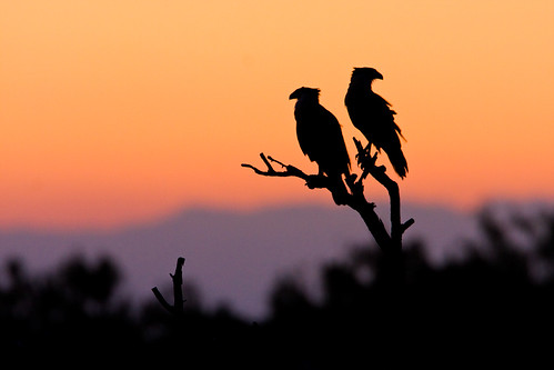 Silhouetted at Sunset | by Seth Patterson