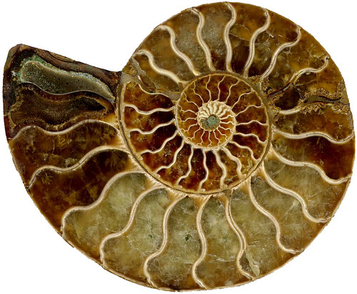 Spiral fossil | by Penelope Else