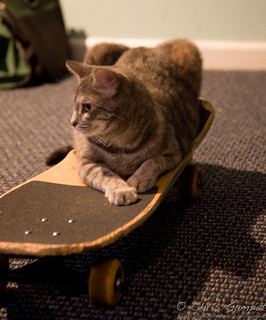 Cat thinks it's the next Tony Hawk | by ChrisGampat