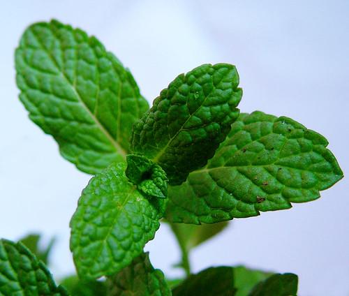 5 plantas aromaticas yahoo dating 5