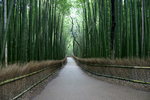 Kyoto Bamboo Road | by AJ Brustein