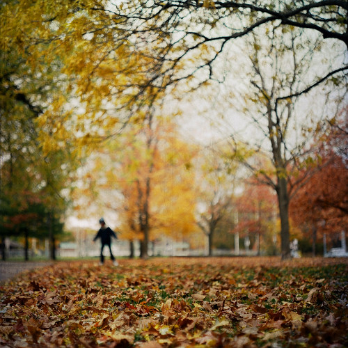 traversing leaves | by leslie*thomson