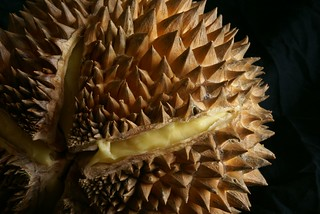 durian | by Crystalline Radical