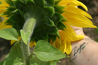 sunflower adventure | by beth mercer