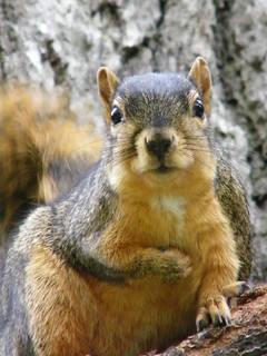 119/365/484 (October 8, 2009) - Squirrel at the University of Michigan | by cseeman