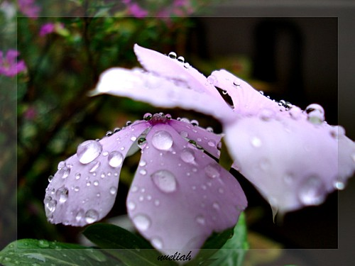 gotas | by nueliach(thanks you for comments)