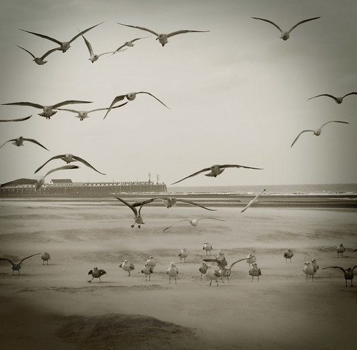 be free and learn to fly | by justk photography