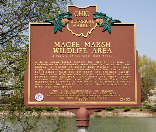 Magee Marsh, Ohio wildlife refuge-7 | by Midwest Guest
