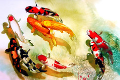 KOI 5218 Watercolor | by sia.yekchung 谢一春