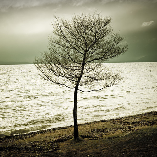 tree | by ►CubaGallery
