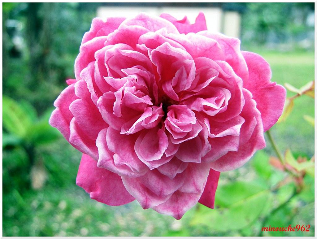 Img 3559 Macro Fleur Ile De La Reunion Michel Lemaitre Flickr