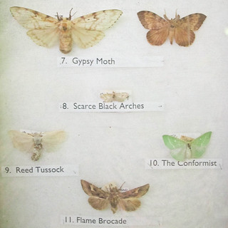 The Moth Collection | by _cassia_