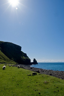 Sunbathing Sheep, Talisker Bay, Isle of Skye | by www.bazpics.com