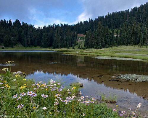 Tipsoo Lake Mount Rainier National Park Last Saturday