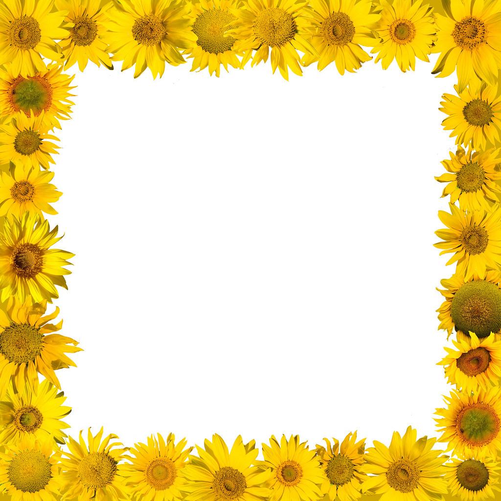 sunflower frame | CG2024 | Flickr