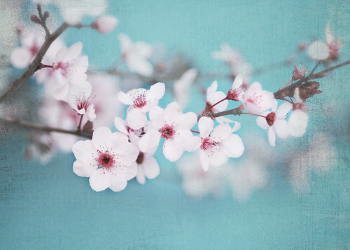 Spring Blossoms... | by Shana Rae {Florabella Collection}
