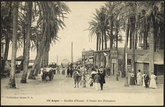 Algiers: Botanical Garden, Palm Oasis (GRI) | by Getty Research Institute