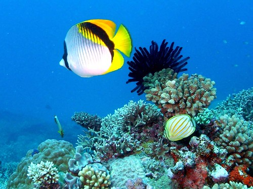 diving the ribbons | by Cruising, traveling & dive pics.